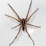 A 1 Pest Control Home Spider Treatment